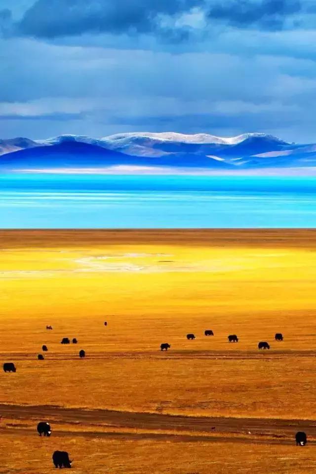 不到阿里,枉至西藏!天上阿里宣传片,这才是西藏真正的模样!