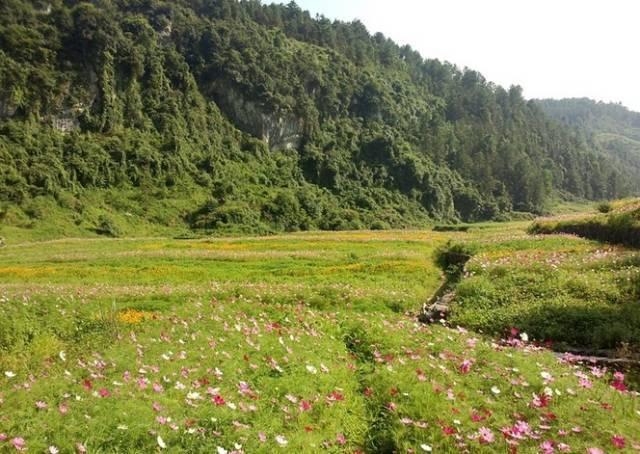不用去内蒙古!重庆竟藏着15个大草原!哪个春色最迷人?