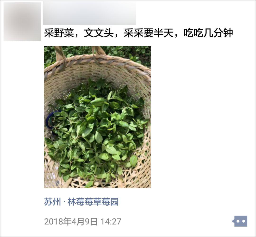 """苏州人爱挖野菜到了这种地步?有些地方都快""""秃了""""..."""