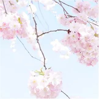 http://www.xpqci.club/hunanfangchan/48426.html