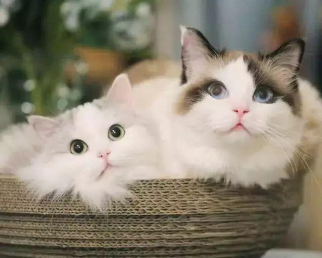 網紅貓與逗比貓的區別到底在哪裏??