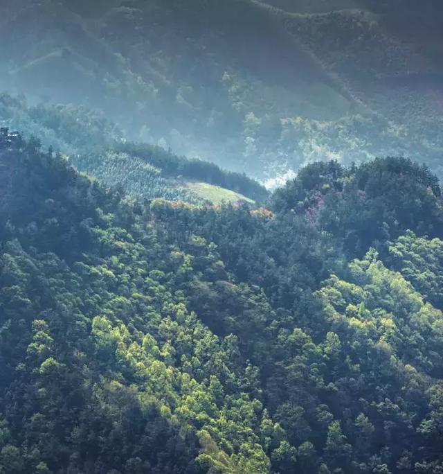 世界上的另一个你,在这片中国最美的小森林里图片