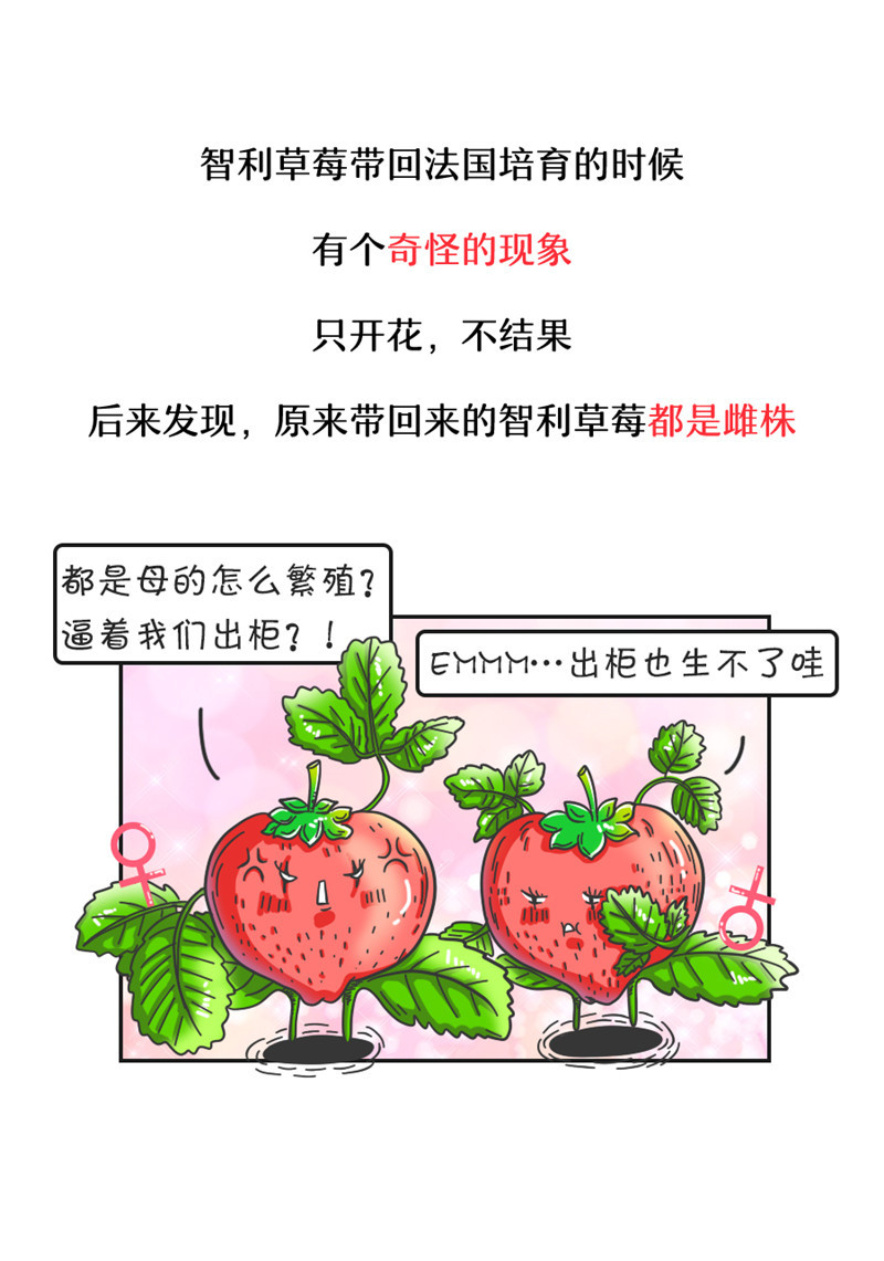 毛线钩草莓花样图解⊙种草莓还有这么多花样?