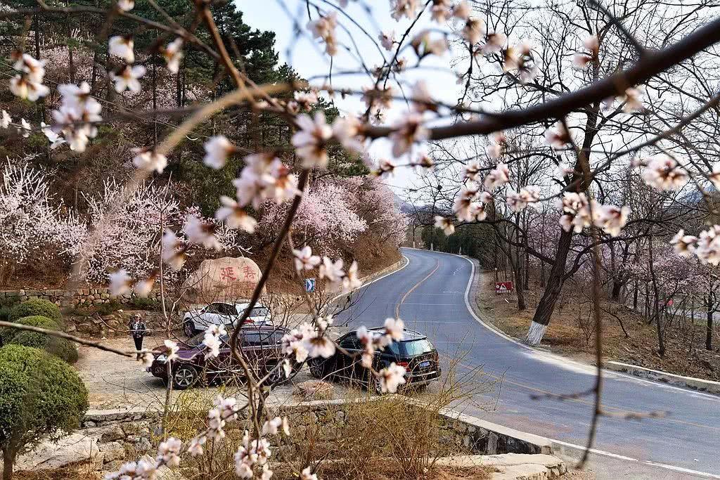 北京最美花海公路就藏在昌平,花开成海,美成仙境!