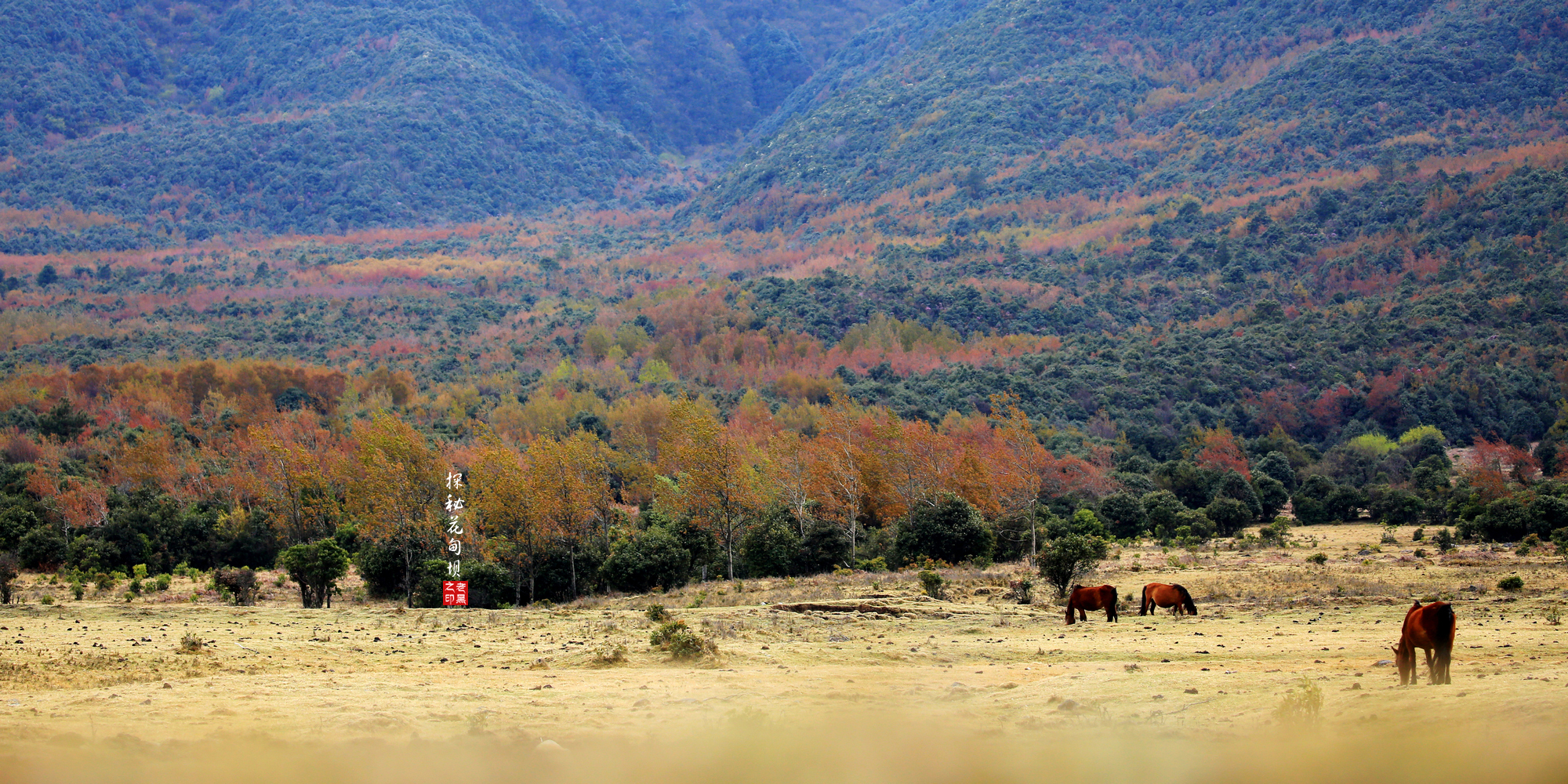 除了苍山洱海和双廊,大理还有秘境桃源,春日里,花开满山,秋色正浓
