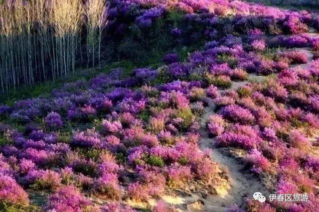 这是春天的颜色.