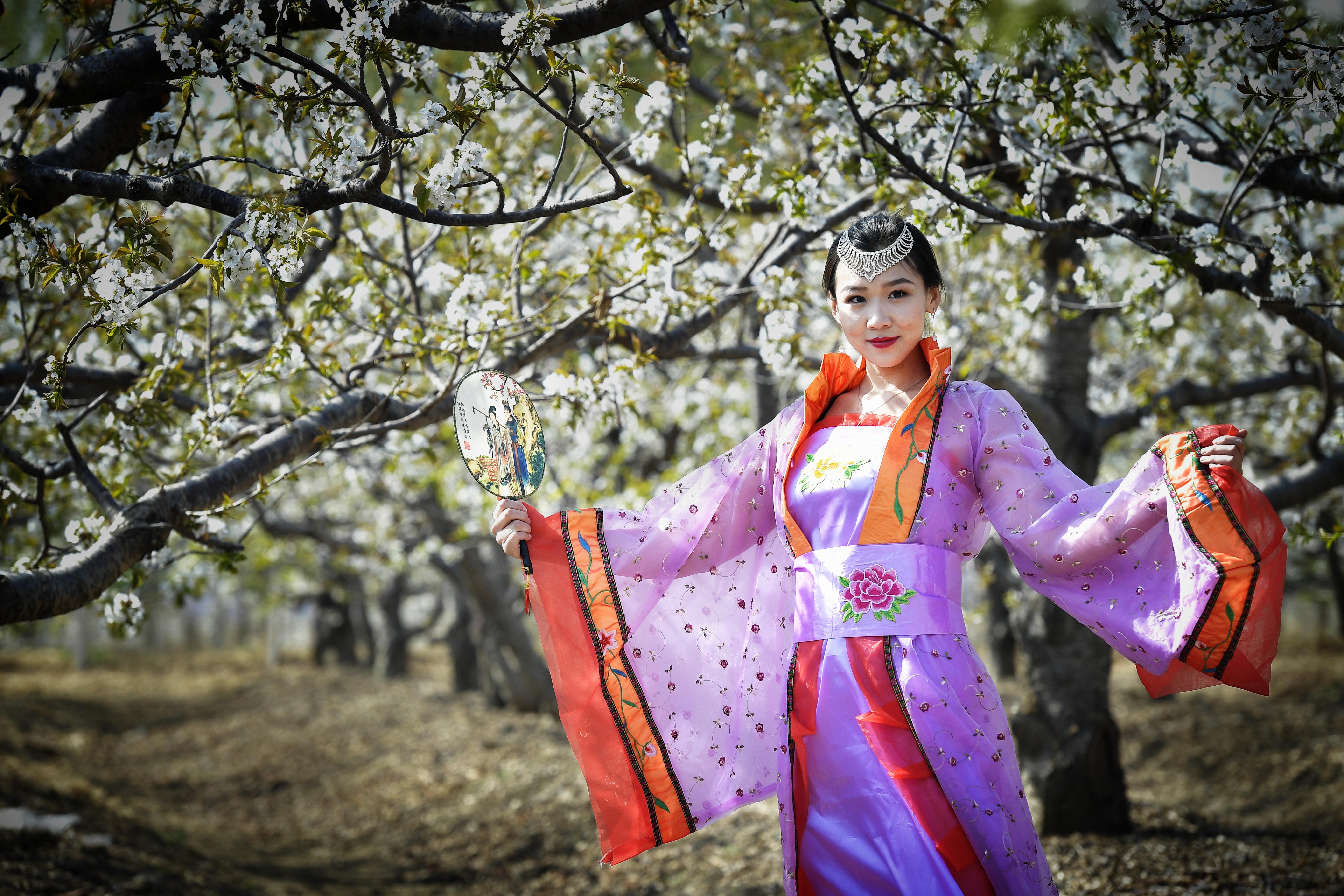 北京西集变花海,万亩樱桃花成模特