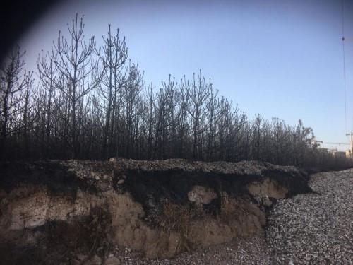 灵丘一老板非法安装变压器引发火灾烧毁苗木丨多家媒体报道