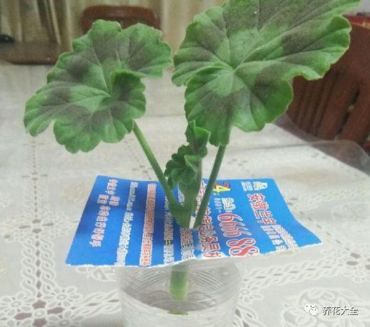 塑料瓶盆栽手工制作diy