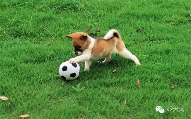 狗狗缺鈣了,會有哪些表現呢?