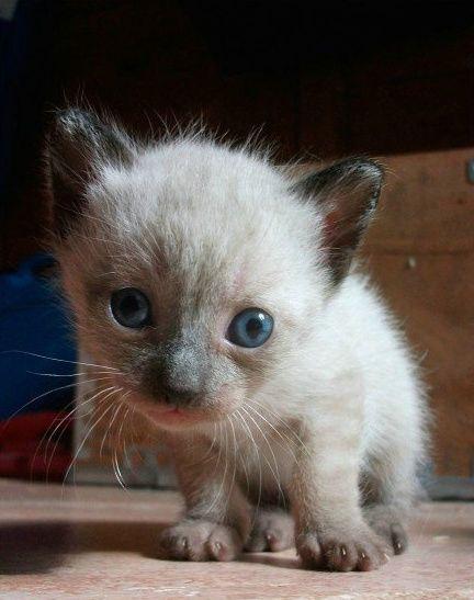 網友發現自家白貓越養越黑,擔心的要命,檢查結果卻哭笑不得