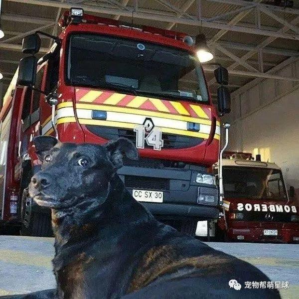 隊犬離世,消防隊舉辦隆重儀式告別:你永遠使我們的一份子!