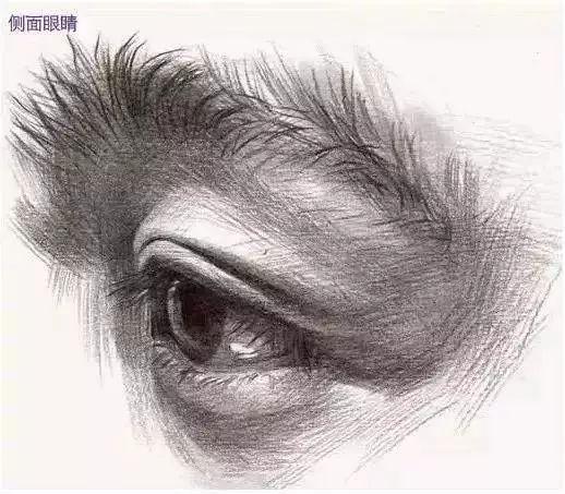 眉毛画法教程铅笔画