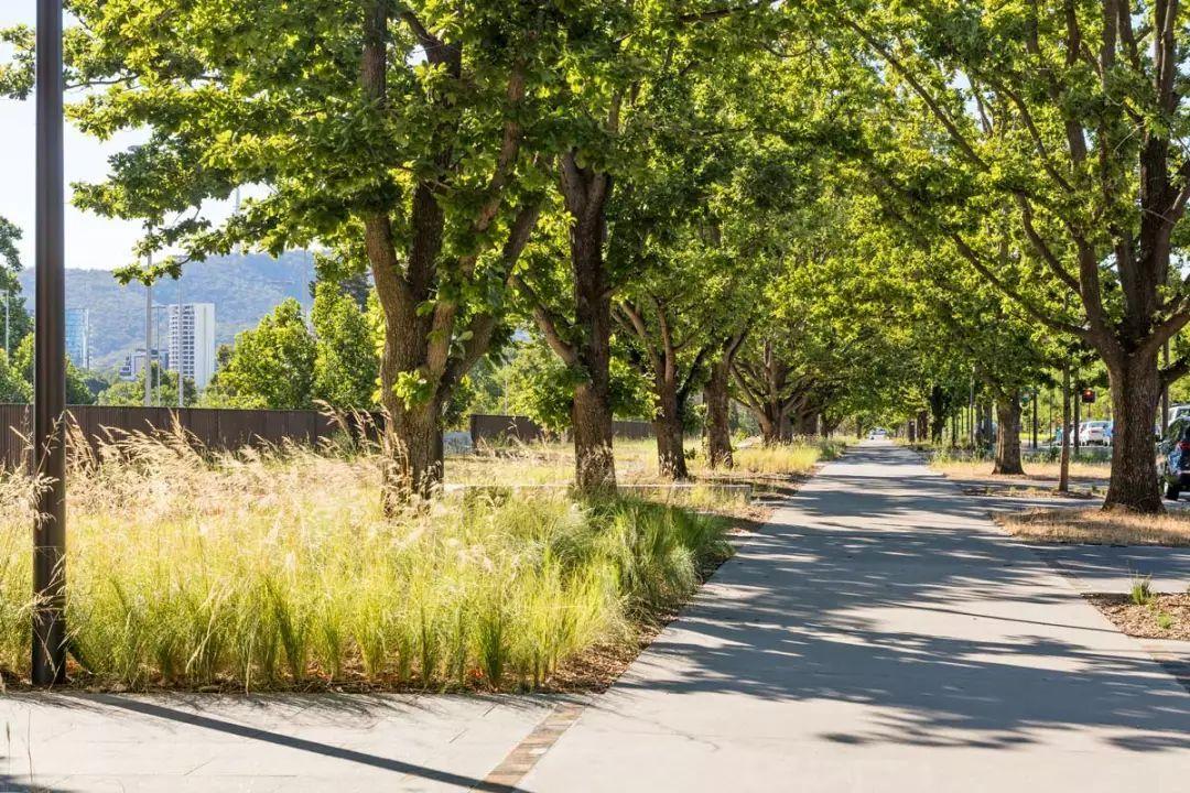 城市道路植物景观