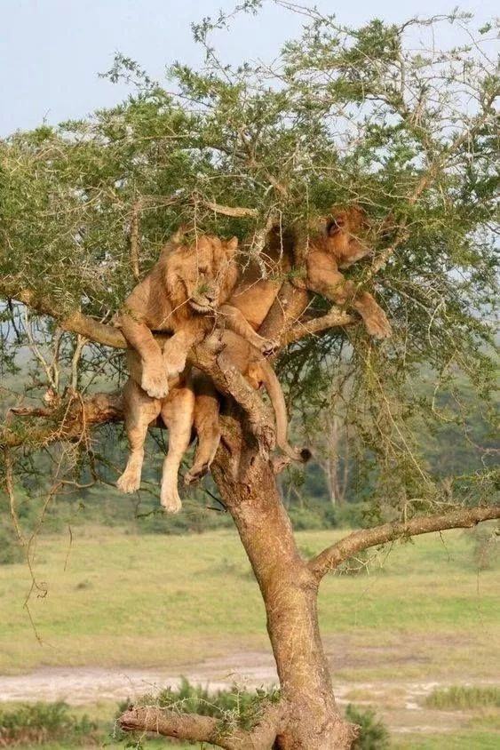 15隻喜歡上樹的動物,是不是很厲害
