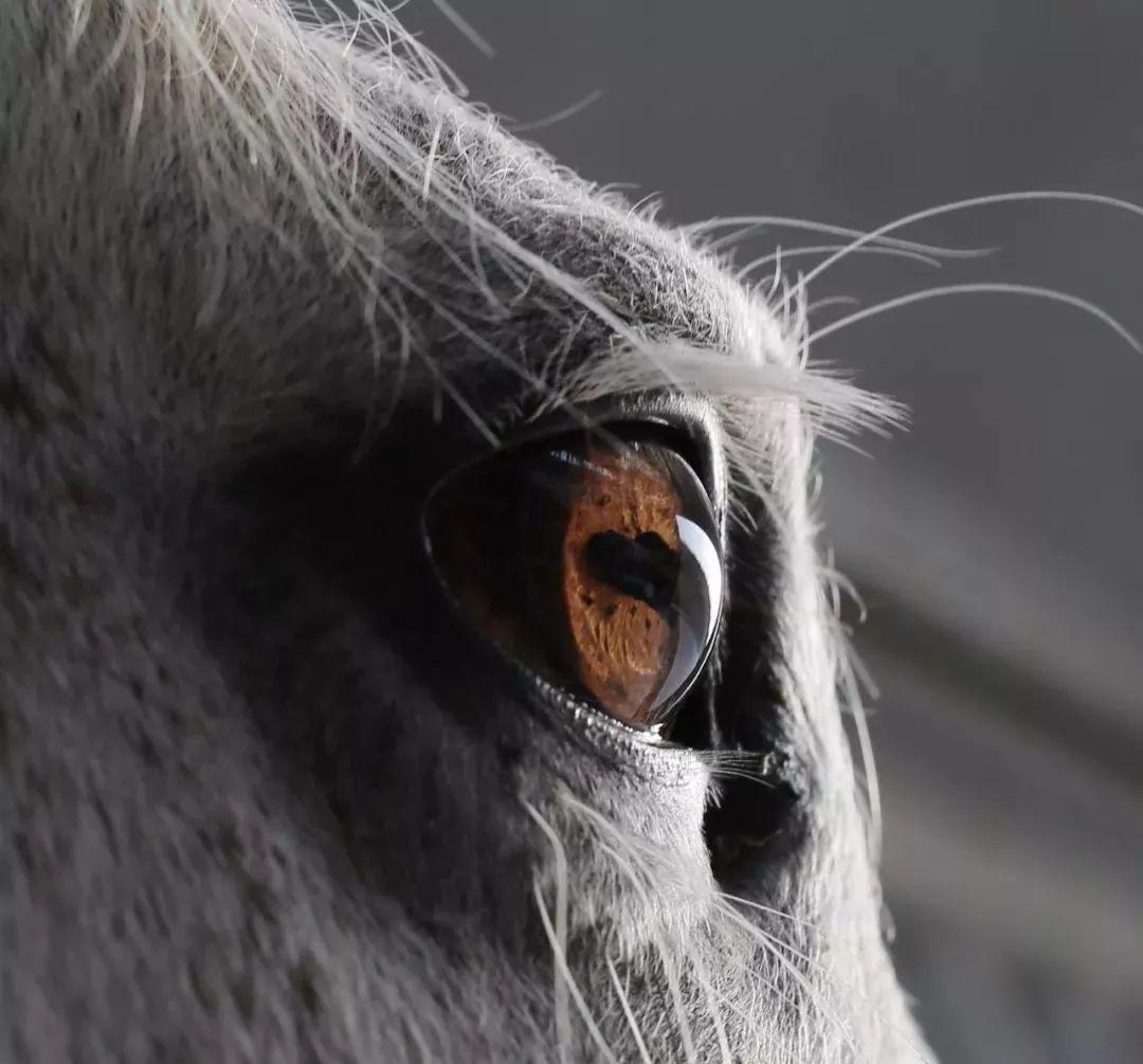 唐僧骑白马的图片