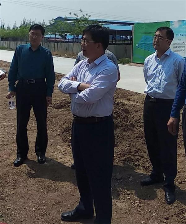 沧州市青县县长卢晓东在木门店镇规模化肉羊养殖基地调研