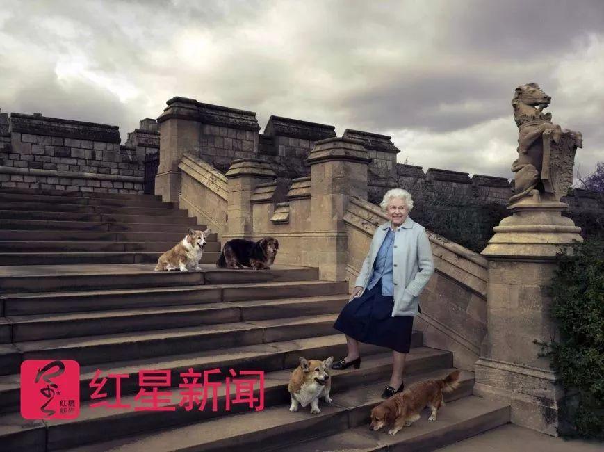 91岁英女王痛失最后一只柯基犬 它曾和007出镜伦敦奥运会