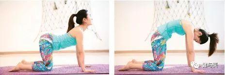 吃节日大餐前 先做这七个瑜伽体式图片