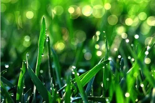 谷雨是二十四节气的第六个节气,也是春季最后一个节气,每年4月19日~2