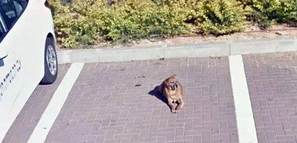 愛犬去世多年後,主人竟在谷歌街景中再次見到它的身影...
