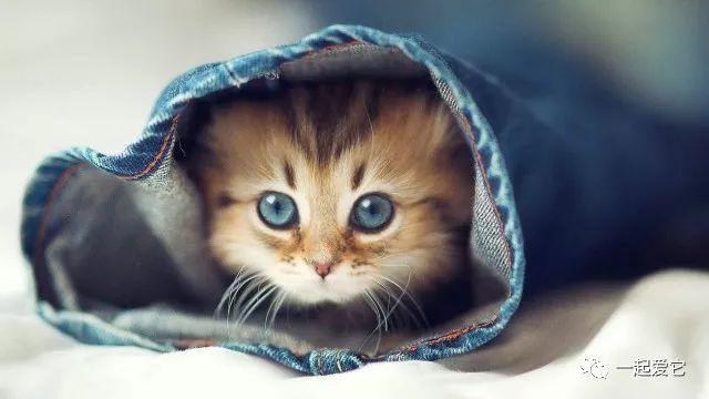 寵知識 | 犬貓到底有多少看不見的蟲