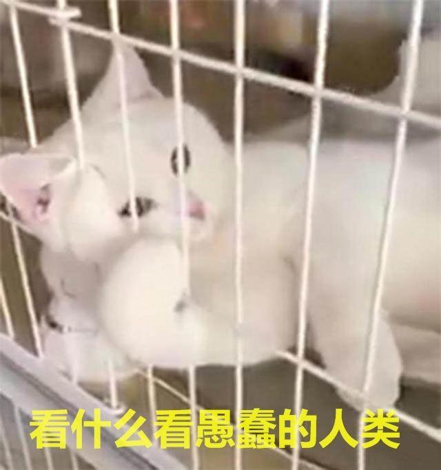 到寵物店買貓,被這隻貓的姿勢笑瘋,網友:這隻貓妖,多少錢一斤