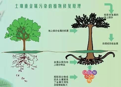 15种常见土壤地下水修复技术