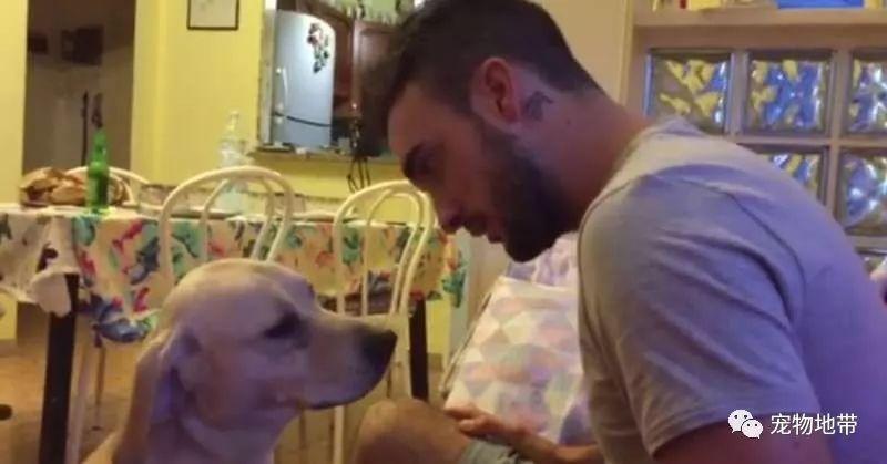 又一隻犯錯後會撒嬌的狗狗  打不得  主人只能抱抱安穩狗狗