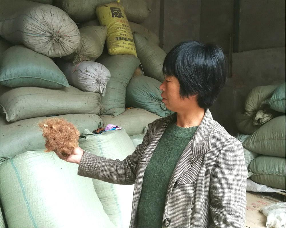 农村人种了半辈子玉米,还不知道玉米须能卖钱,要它有啥用?图片