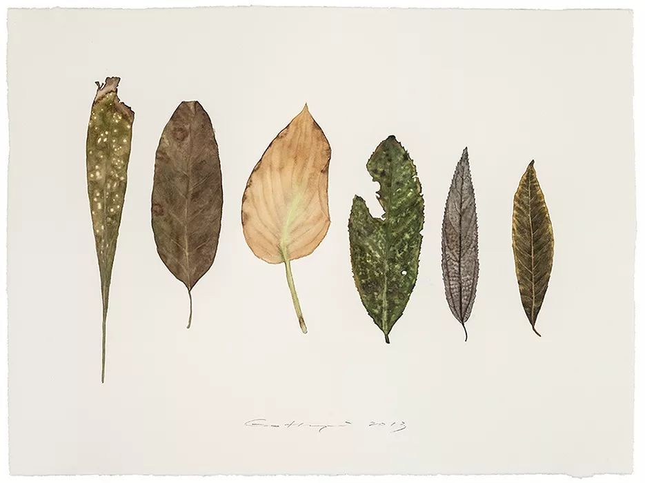 郭鸿蔚画的树叶都是他平日里收来的图片