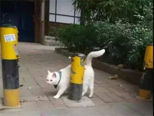 猫咪假装走丢,骗客进店消费,网友:生意人!