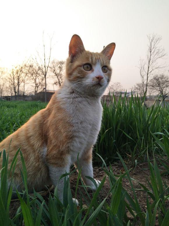 遛貓不用牽引繩,遇到熟人聊天就坐下來等着,網友直呼:成精了!
