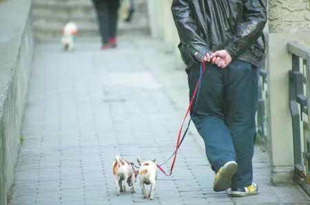 想要爸媽身體健康,那就養只狗給他們吧