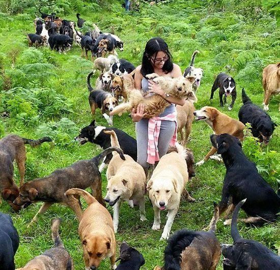 现实版犬之岛,1000多条流浪狗的天堂,网友:幸福的流浪狗