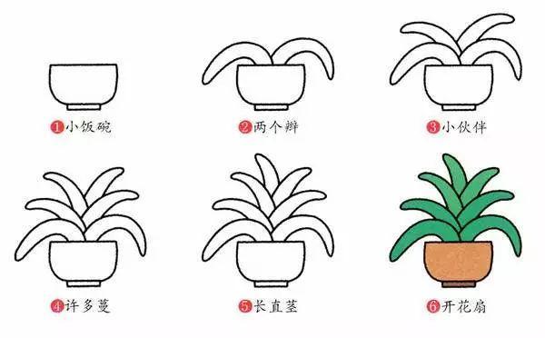 君子兰植物花简笔画