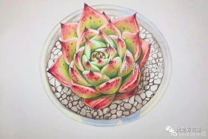 彩铅多肉植物手绘教程⊙多肉一盆~~彩铅手绘过程