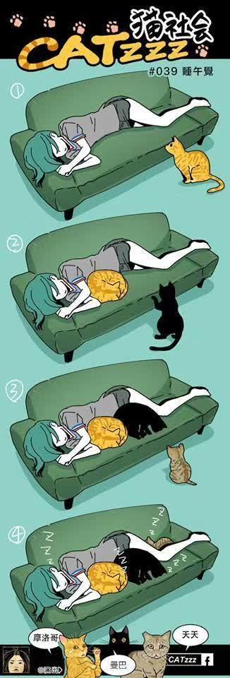 台湾网友用漫画记录了家里两只猫咪的日常,可爱到想哭...