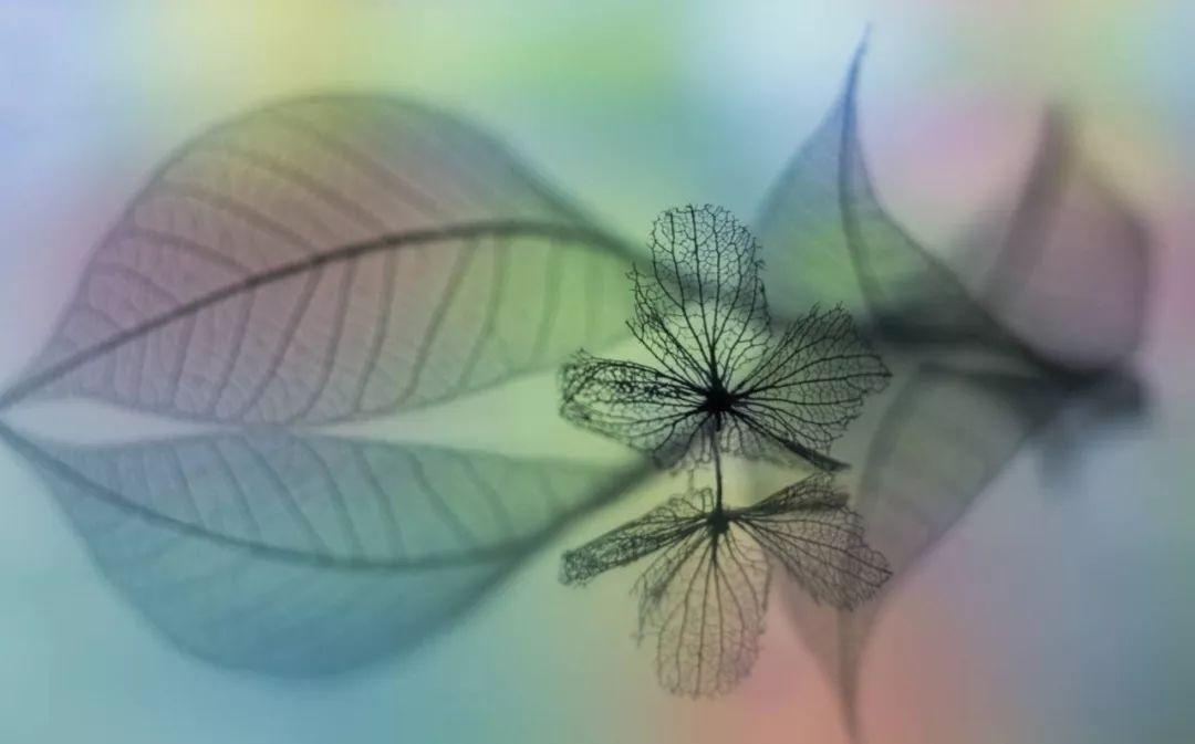 昆虫消化系统手绘