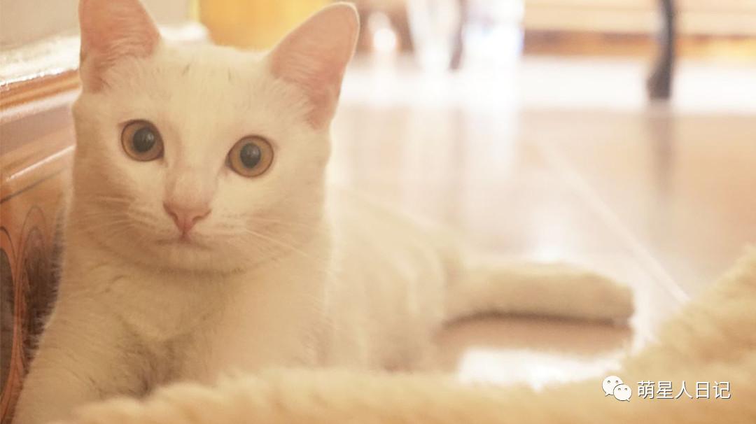 害怕猫咪的人是你们打开猫咪的方式不对!你应当这么做