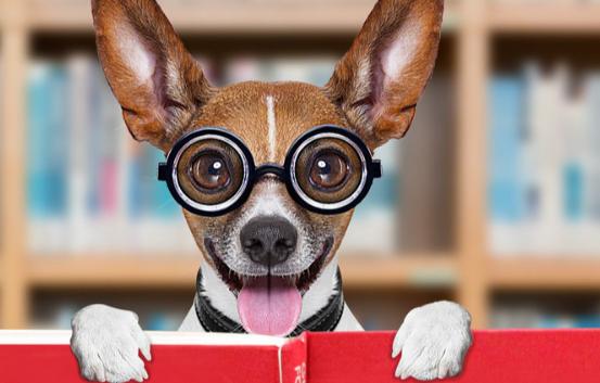 SPF CHINA即2018上海国际宠物食品用品及宠物展览会