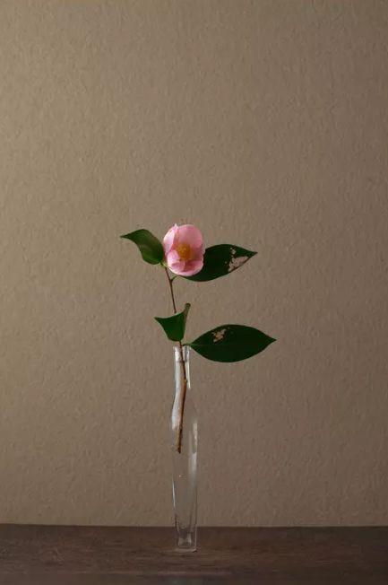 禅意插花,一花一世界,一叶一菩提.给你的书桌和灵魂添点色彩图片