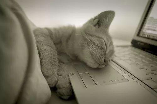 猫呼吸道感染症状呼噜图片