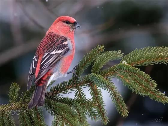 全球最罕见动物,全世界最···最罕见的鸟、最美的鱼,集齐了! - 冰融 - 冰融的博客