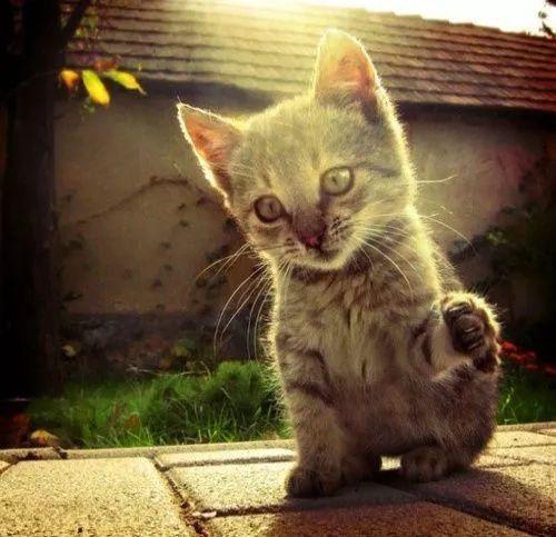 猫呼吸道感染会自愈吗图片