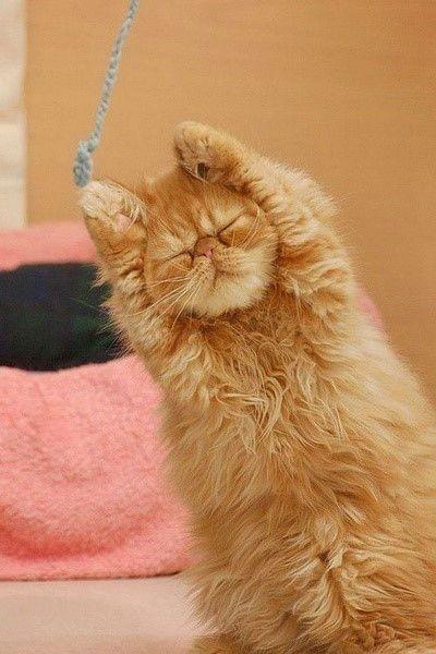 猫呼吸道感染病毒症状图片