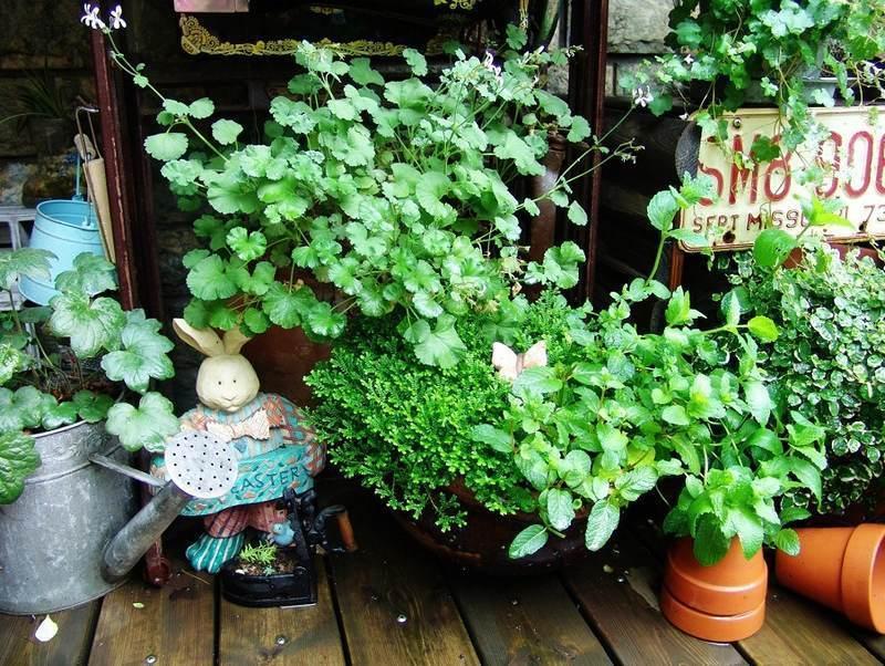 """诗情画意""""小花园"""",慢慢来,慢慢品!图片"""