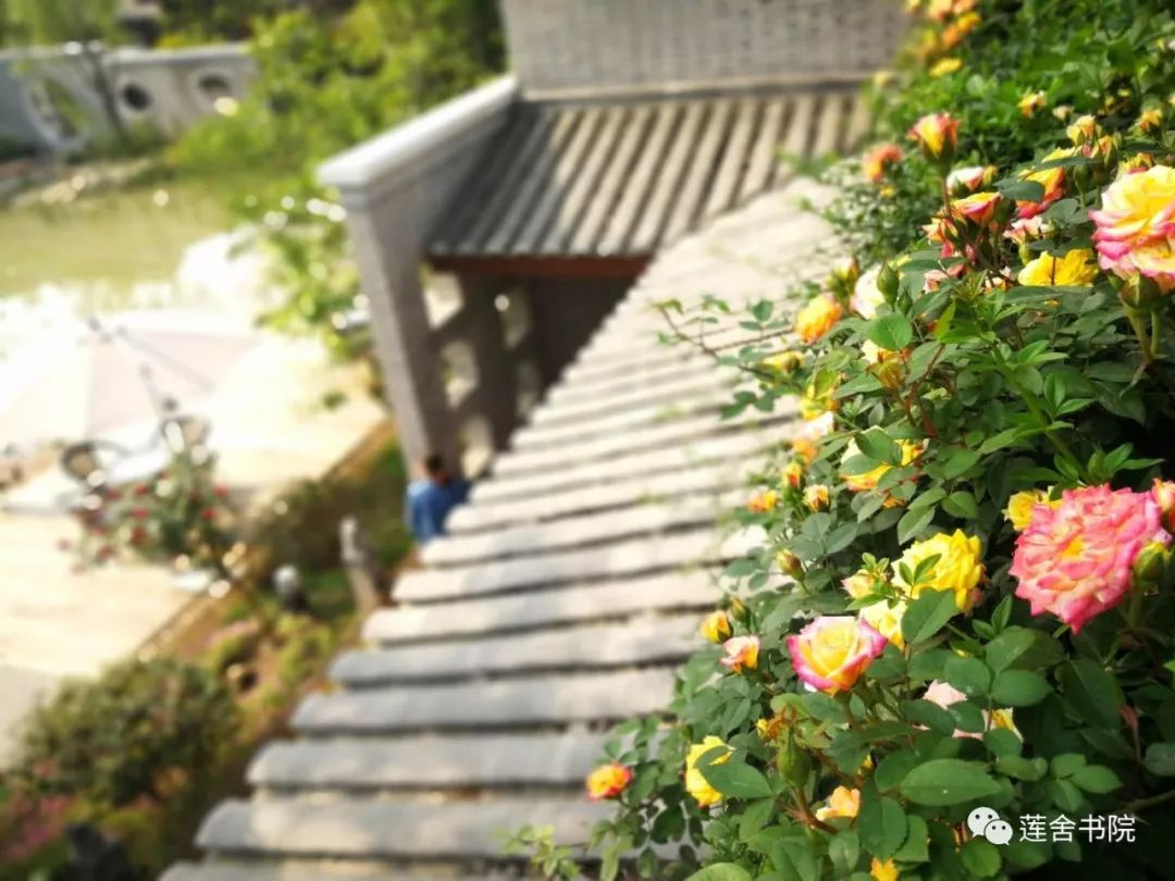 【倪莉散文】因风吹过蔷薇香