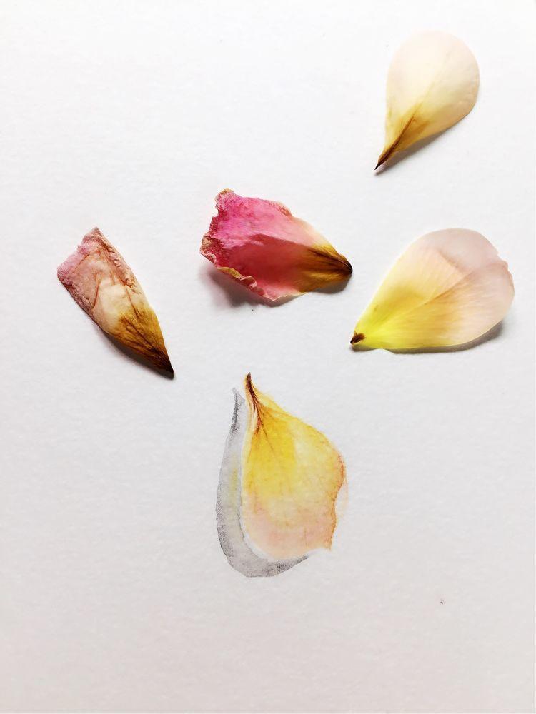 用画笔记录 落花的姿态 ,最后一张图很赞哦,彩铅手绘教程
