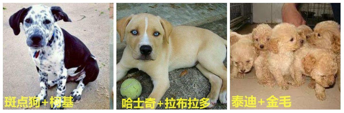 林永健孙红雷狗照片_史上颜值最低哈士奇,看它一眼,你就知道爸爸是谁了!
